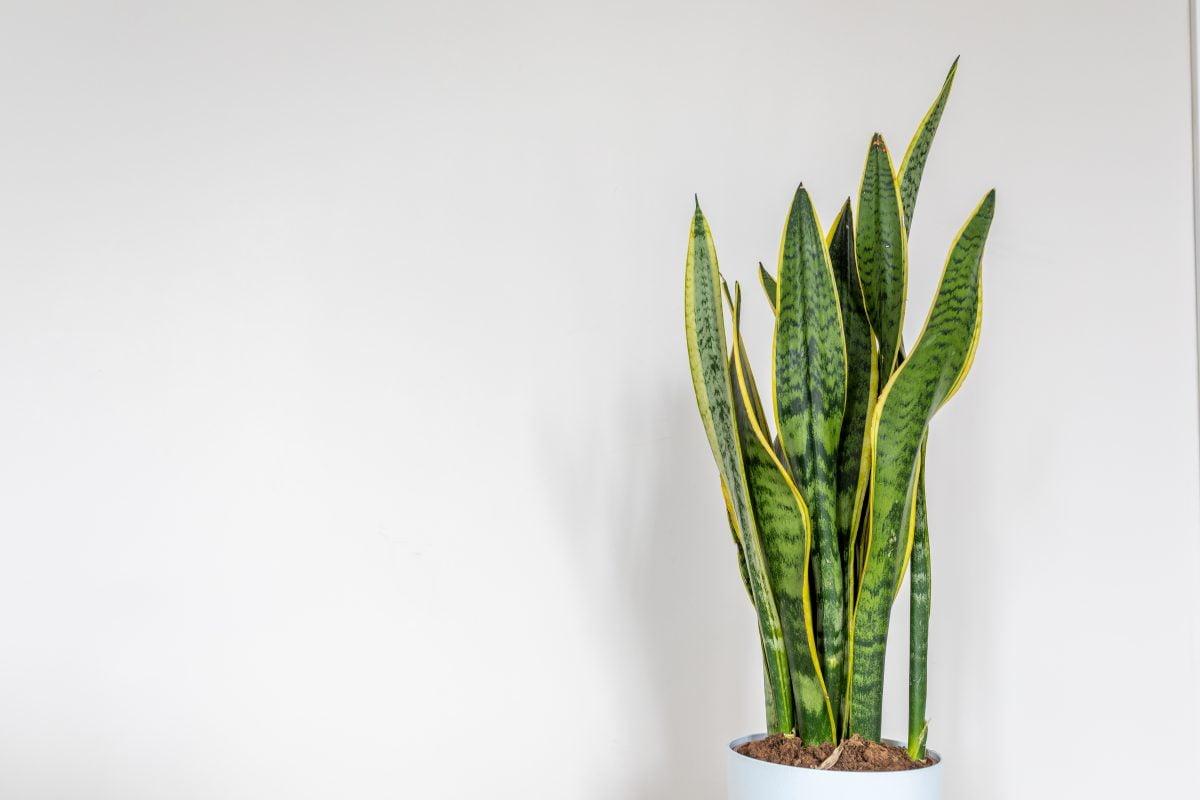 le piante per il bagno AdobeStock 331126430