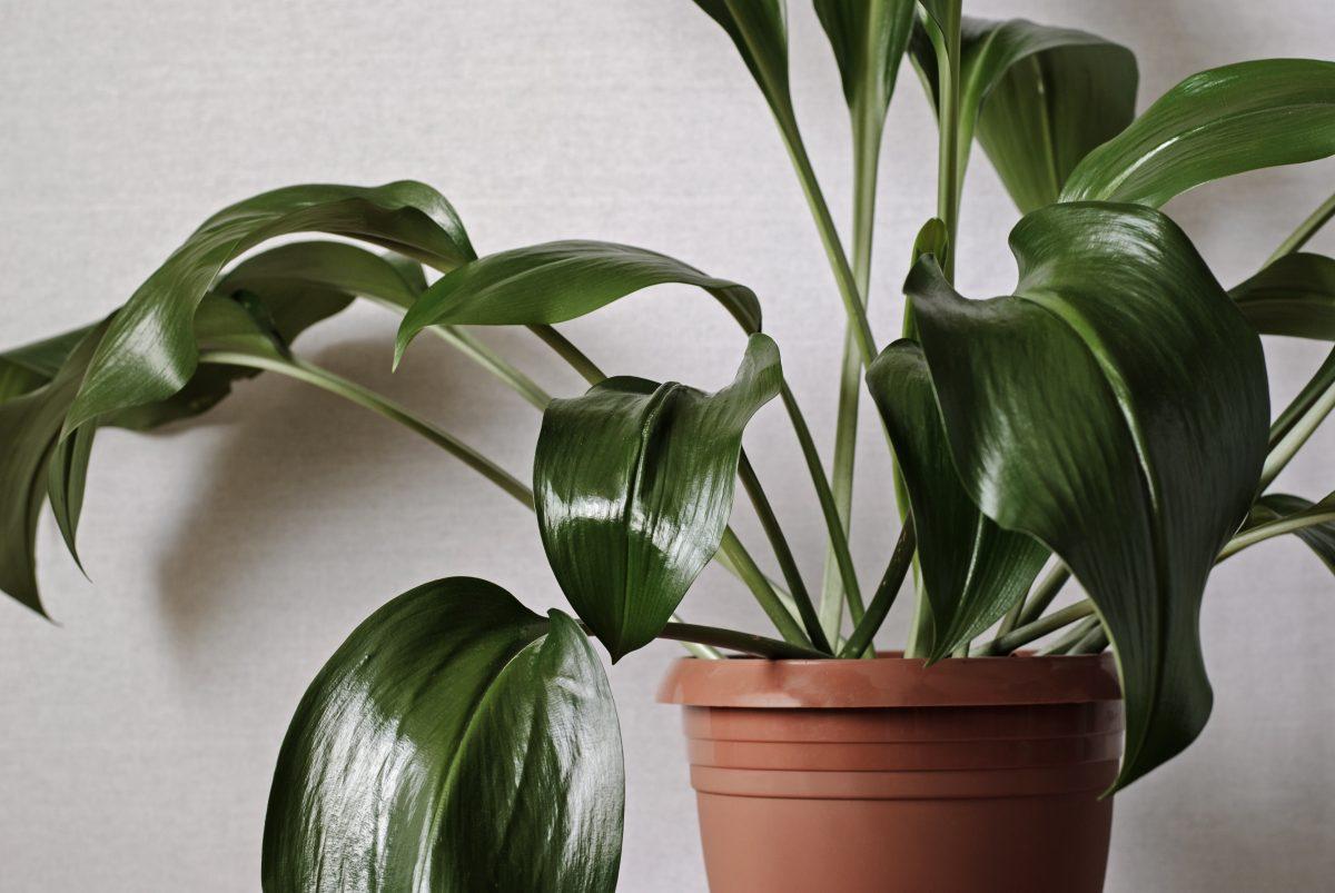 le piante per il bagno AdobeStock 332667506