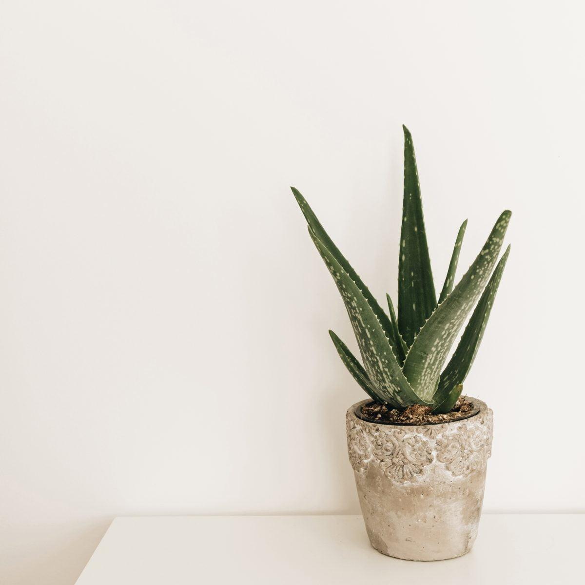 le piante per il bagno AdobeStock 376488835