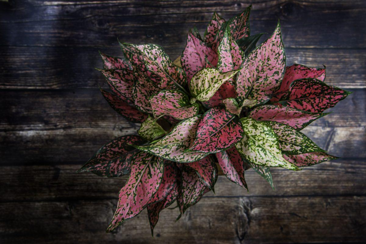 le piante per il bagno AdobeStock 387718984