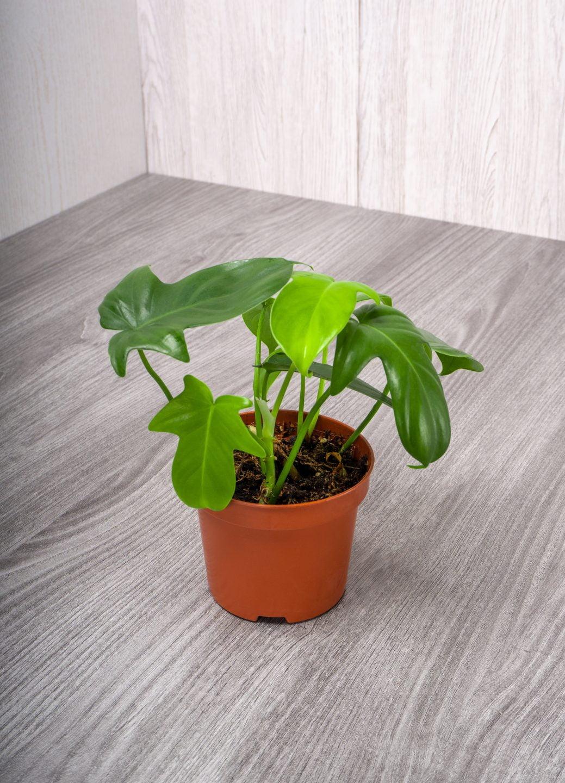 le piante per il bagno AdobeStock 411243261