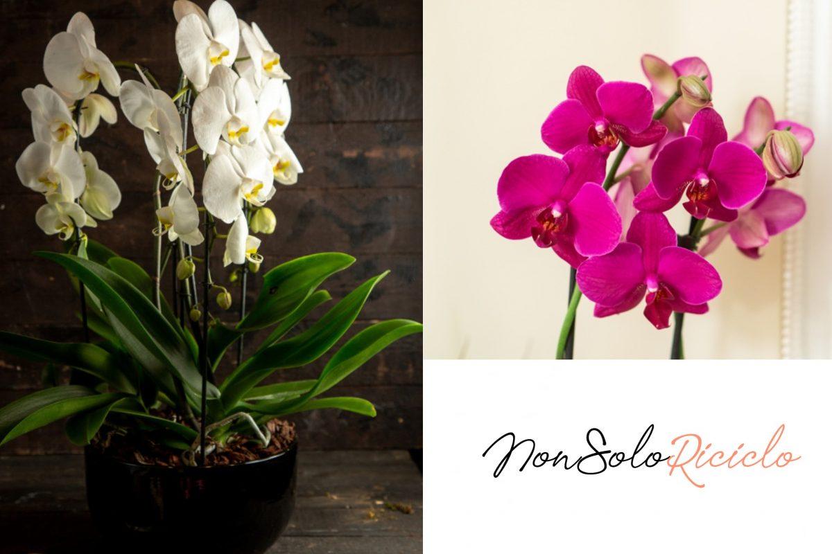 Orchidee bellissime con questo trucchetto geniale! Provateci!