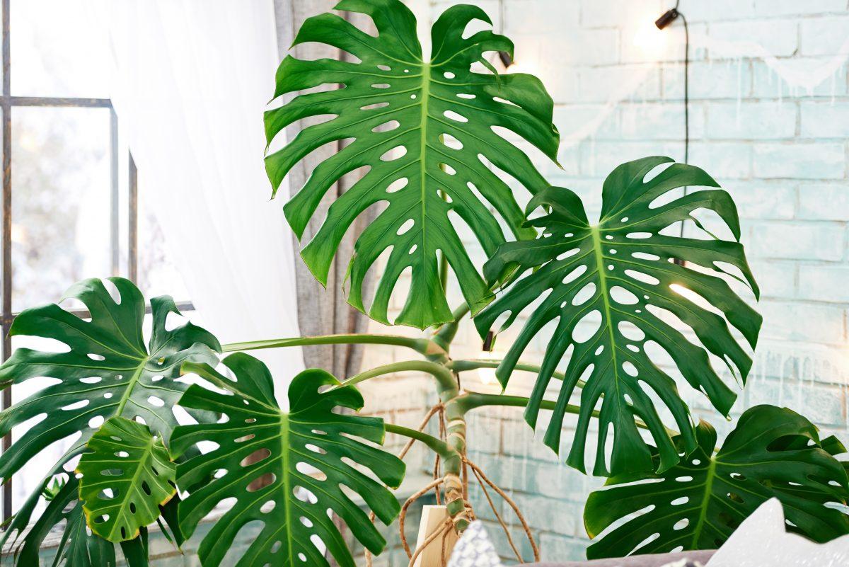 piante rampicanti da avere in AdobeStock 202024172