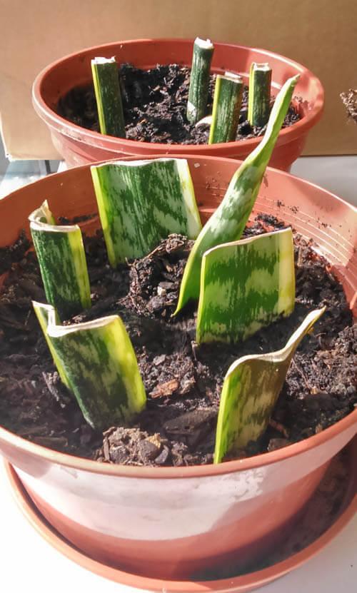 Come riprodurre le piante da interno e come farle crescere rigogliose!