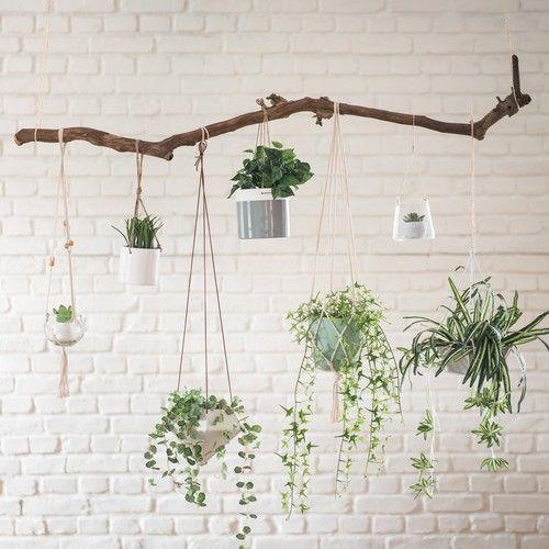 sistemare le piante in ufficio 2
