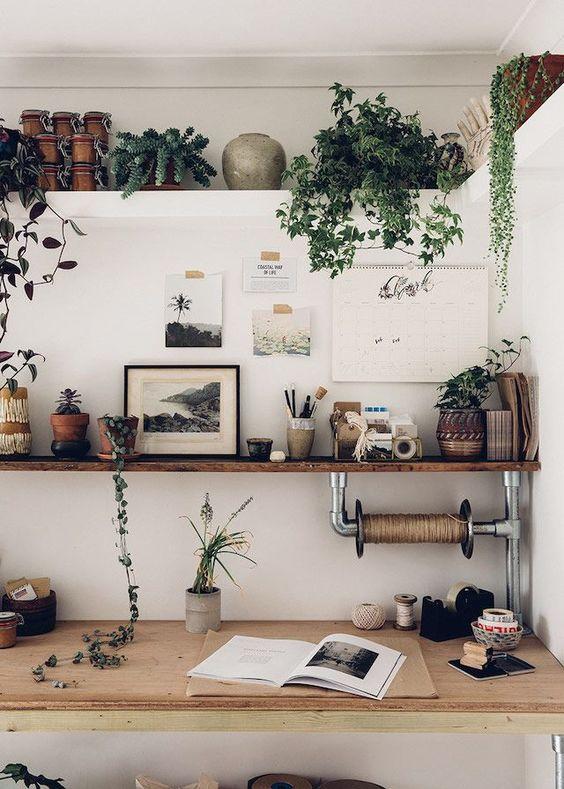 sistemare le piante in ufficio 3