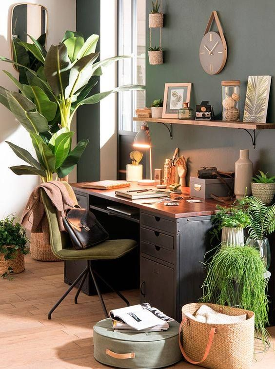 sistemare le piante in ufficio 4