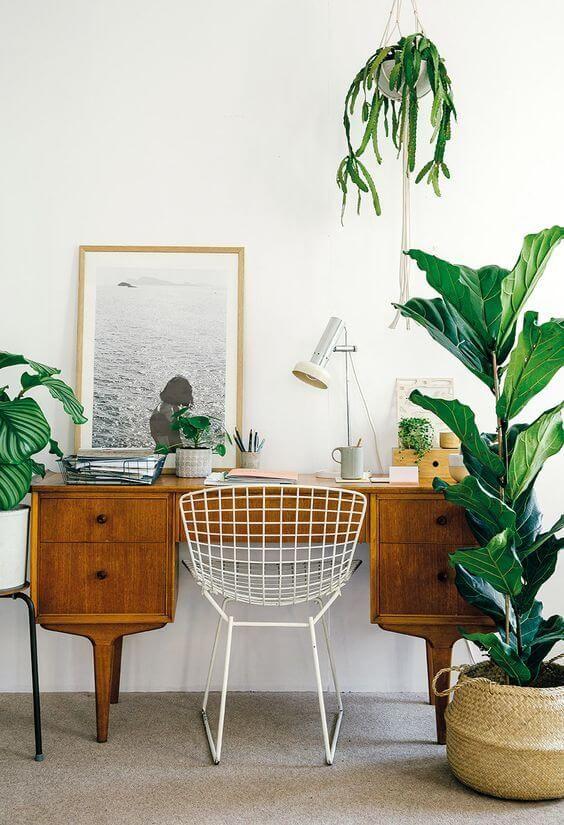sistemare le piante in ufficio 6