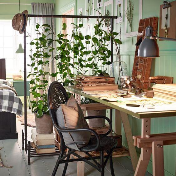 sistemare le piante in ufficio 8