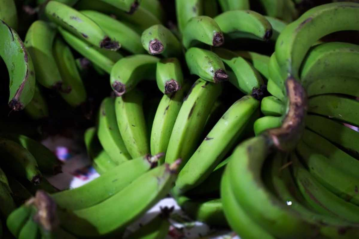 banane verdi fa male mangiarle green bananas indian market mauritius 199620 5271