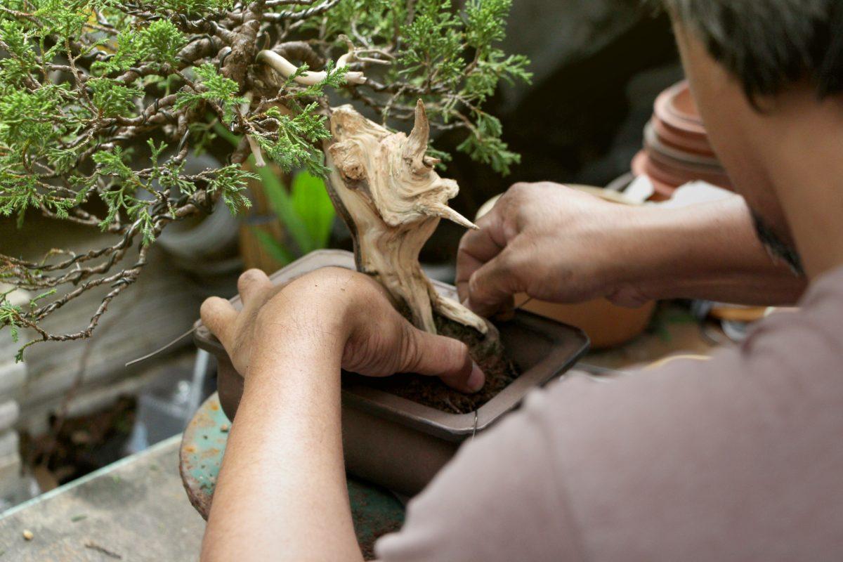 curare un bonsai mini guida AdobeStock 287060465