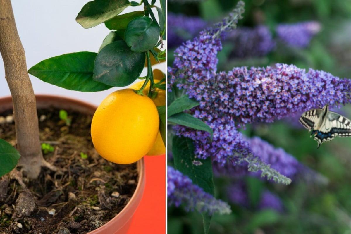 le piante migliori per trasformare fiori balcone