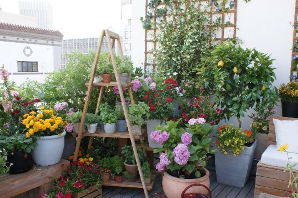 le piante migliori per trasformare piante balcone