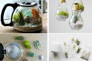 mini giardino in casa perfetti mini giardino