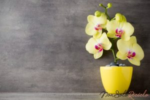 orchidee super fiorite basta un 2