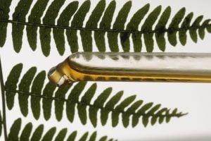 piante profumate da avere in AdobeStock 20020289