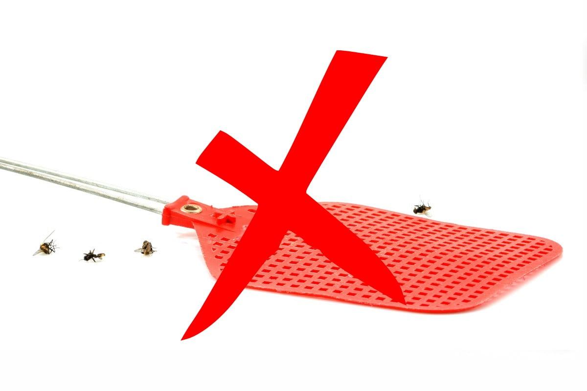 usa questo trucchetto allontana le mosche addio