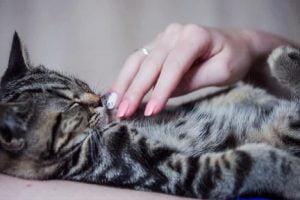 accarezzare un gatto scopri perche 1