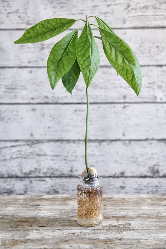 come far ricrescere semi verdura 1