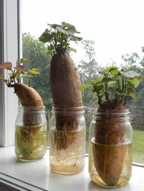 come far ricrescere semi verdura 4