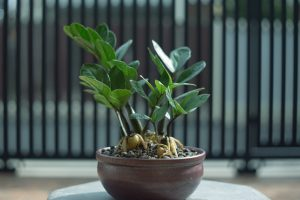 ecco 5 piante da appartamento AdobeStock 405591077