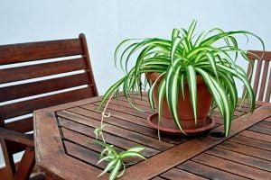 ecco una pianta da interno AdobeStock 124007872