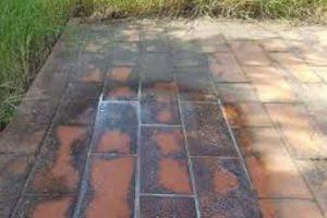eliminare il muschio da muri muschio in giardino