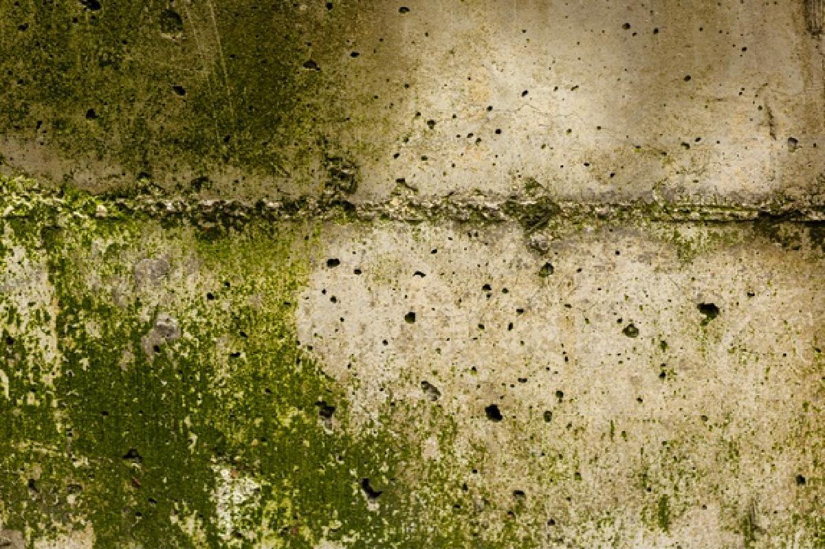 eliminare il muschio da muri rough concrete surface with moss 23 2148394834