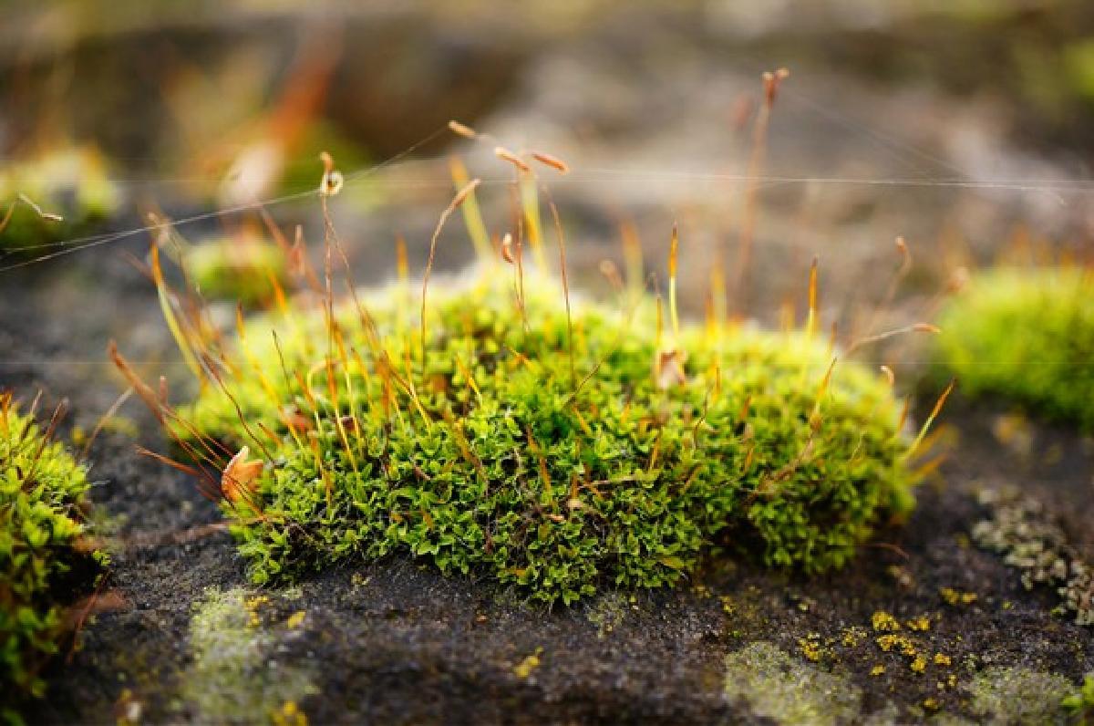eliminare il muschio da muri soft focus patch moss with strings web rock 181624 15644