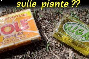 quale sapone usare per le sapone piante