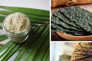 10 cose incredibili che puoi alghe