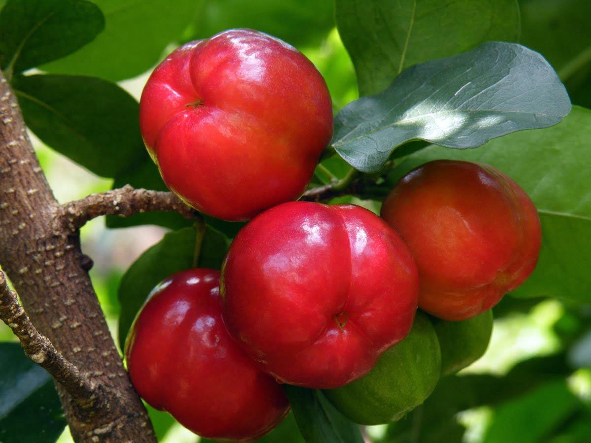 i 10 cibi piu ricchi acerolafruit