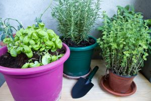 le nove piante aromatiche da AdobeStock 110010033
