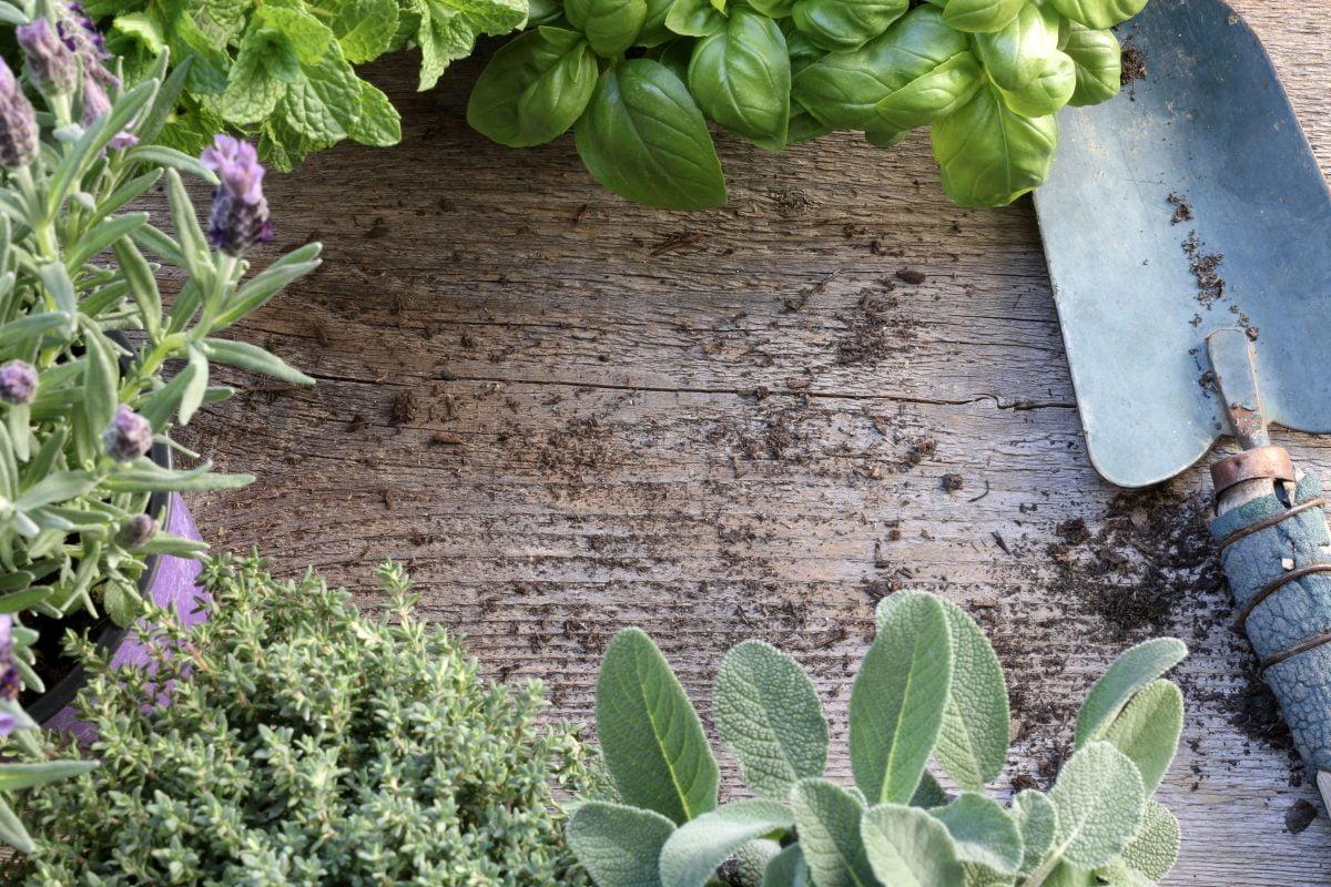 le nove piante aromatiche da AdobeStock 258776818