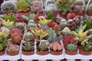 piante grasse come creare un AdobeStock 140542394 1